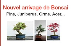 Arrivage de Bonsai