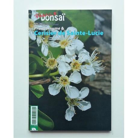 France Bonsai numéro 123  -  Prunus mume et cerisier de Sainte Lucie
