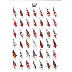 Koi Poster plastifié N°1 - 70x100cm