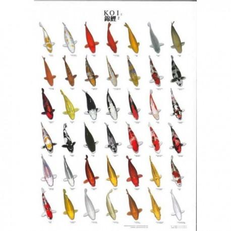 Koi Poster plastifié format A4